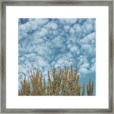Top Pigeons #birds #pigeon #trees #sky Framed Print