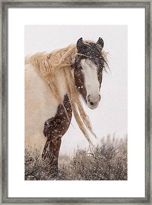 Topeka In Winter Framed Print by Sandy Sisti