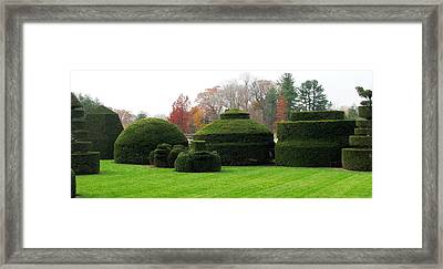 Topiary Garden Framed Print by Angela Davies