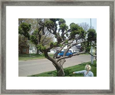 Topiary Pella Tree Framed Print