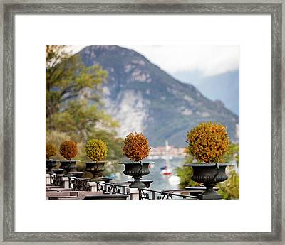 Topiary Plants On Patio In Italy Framed Print by Susan Schmitz