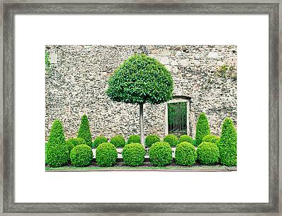 Topiary Tress Framed Print