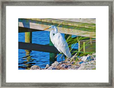 Topsail Egret Framed Print