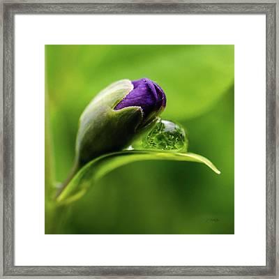 Topsy Turvy World In A Raindrop Framed Print by Jordan Blackstone
