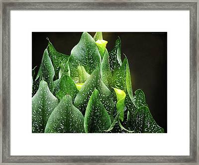 Torches - Calla Lilies Framed Print by Michael Taggart II