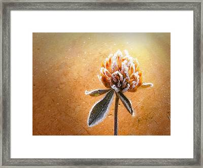 Torcia Framed Print by Greg Collins