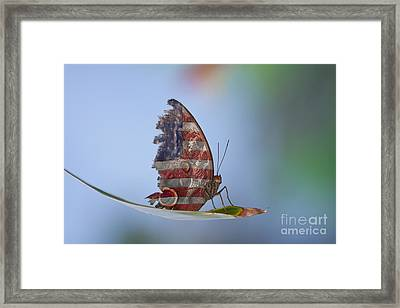 Torn American Butterfly Framed Print by James BO  Insogna