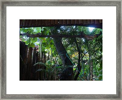 Toros Framed Print