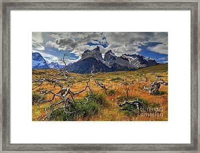 Torres Del Paine 18 Framed Print