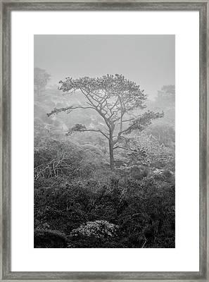 Torrey In Fog Framed Print