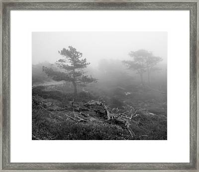 Torrey Pines In Fog Framed Print by Joseph Smith
