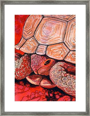 Tortoise Framed Print by Bonnie Kelso