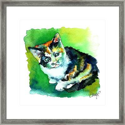 Tortoise Shell Kitten Framed Print by Christy  Freeman