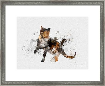 Tortoiseshell Cat Framed Print by Rebecca Jenkins