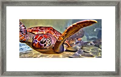 Tortuga Swim Framed Print by Carey Chen