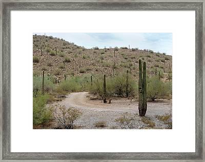 Tortured Cactus Framed Print by Gordon Beck