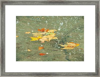 Tossed Leaves Framed Print by JAMART Photography