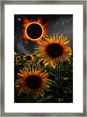 Total Eclipse Of The Sun Over The Sunflowers Framed Print