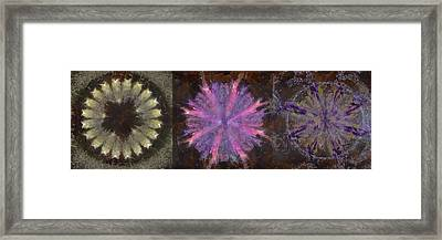 Totalitizer Peeled Flower  Id 16165-060903-72320 Framed Print by S Lurk