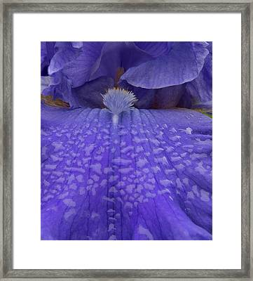 Totally Blue Iris Framed Print by Jean Noren