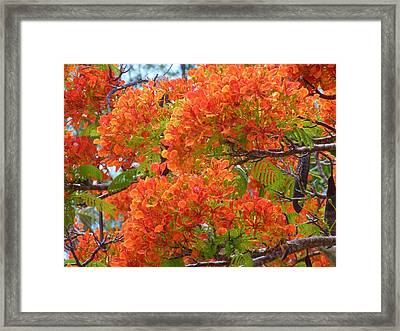 Totally Orange Framed Print