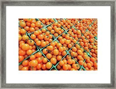 Totally Tomato Framed Print