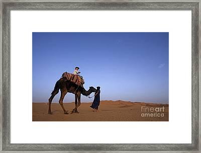 Touareg Man Leading Boy Riding Camel In Sahara Desert Framed Print by Sami Sarkis