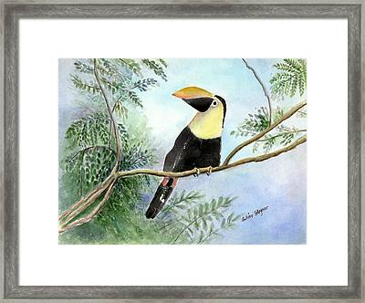 Toucan Framed Print by Arline Wagner