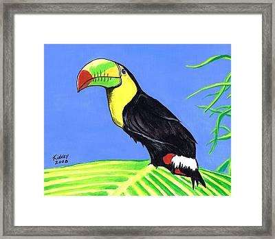 Toucan Bird Framed Print by Jay Kinney