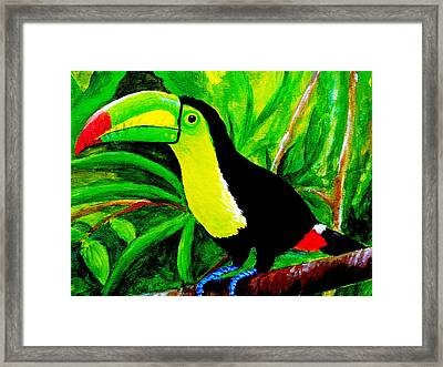 Toucan Sam Framed Print by Anne Marie Brown