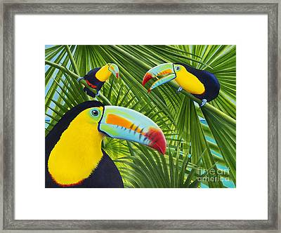 Toucan Threesome Framed Print