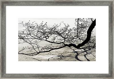 Wonderful Tree Framed Print by Angela Doelling AD DESIGN Photo and PhotoArt