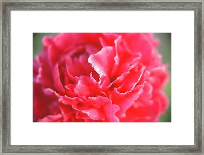 Touch Of Class Framed Print by Jonathan Michael Bowman