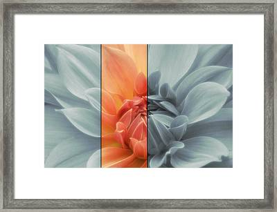 Touch Of Color Dahlia Framed Print by Jacky Gerritsen
