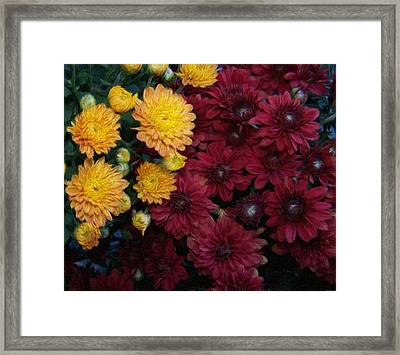 Touch Of Fall Framed Print by Evelyn Patrick