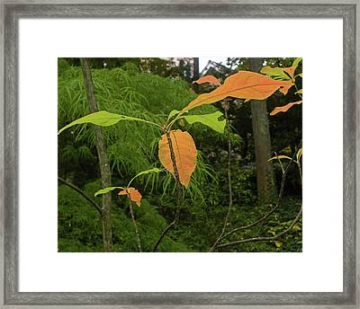 Framed Print featuring the photograph Touch Of Fall by Larry Bishop