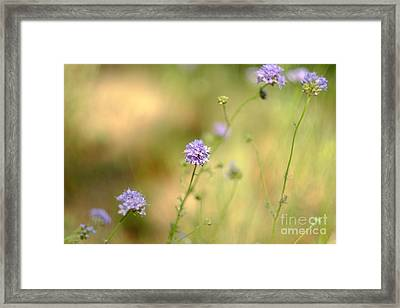 Touch Of Lavender Light Framed Print