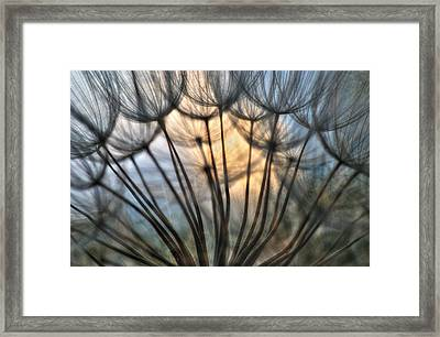 Touch Of Light Framed Print by Iris Greenwell