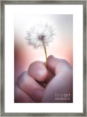 Touch Of Nature Framed Print by Jorgo Photography - Wall Art Gallery