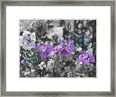 Touch Of Phlox Framed Print