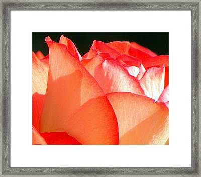 Touch Of Rose Framed Print by Karen Wiles