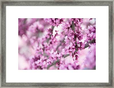Touch Of Spring II Framed Print