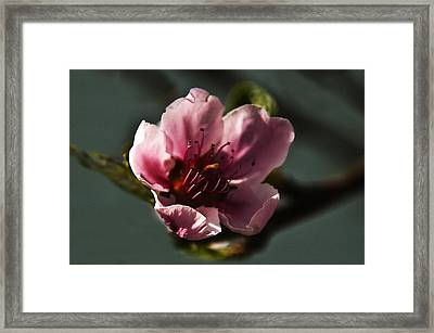 Framed Print featuring the photograph Touch Of Spring by Kathleen Stephens