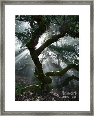 Touched By A Miracle Framed Print by JoAnn SkyWatcher