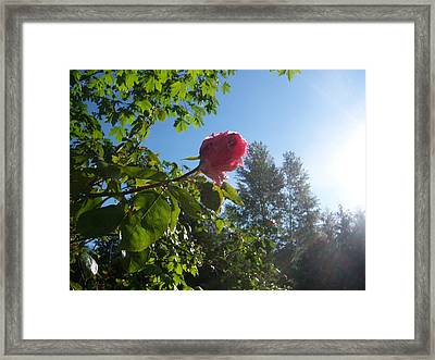 Touched By The Morning Sun Framed Print by Ken Day