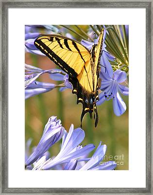 Touching Lilly Framed Print by Gail Salitui