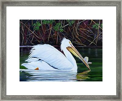 Touring Pelican Framed Print by Marilyn McNish