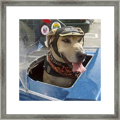 Tourist Dog 2 Square Framed Print