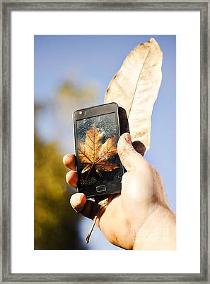 Tourist Man Holding Autumn Leaf And Mobile Phone Framed Print