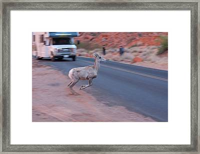 Tourists Intrusion In Nature Framed Print